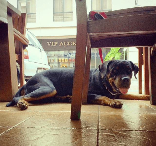 Pet-Friendly Cafes in Klang Valley 1 - Blue Cow Cafe